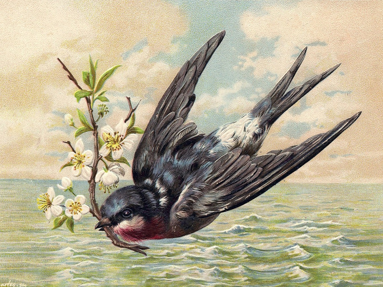Открытка со стрижом, открытки поздравляю открытки